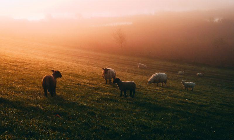 Agroturystyka - dlaczego warto