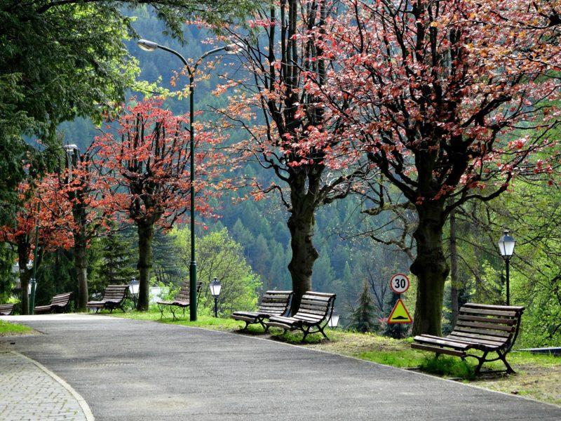 Park z drzewami